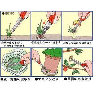 虫・草とりーな - 拡大画像