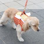 Its Dog(イッツドッグ) マイエンジェルベストハーネス・バブル/オレンジ【XL】