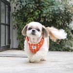 Its Dog(イッツドッグ) バブルキャンディーハーネス/オレンジ【S】