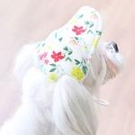 Its Dog(イッツドッグ) ゴーゴーキャップ/ホワイトフラワー【S】