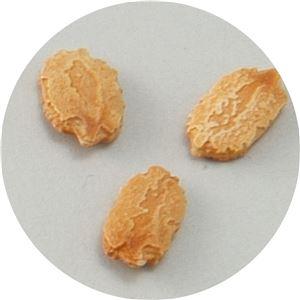 (まとめ)アーテック 野菜の種 ツルレイシ(苦瓜) 苗床付 【×40セット】