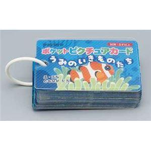 アポロ社 08-304 ポケットピクチュアカード うみのいきものたち 【知育玩具】