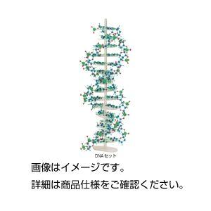 (まとめ)分子構造模型モル・タロウDNAセット DNA-1【×3セット】の詳細を見る