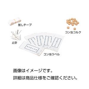 (まとめ)コン虫標本製作用品 コン虫ラベル【×20セット】の詳細を見る