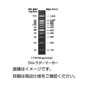 (まとめ)電気泳動用試薬 DNAラダーマーカー100bp【×3セット】の詳細を見る