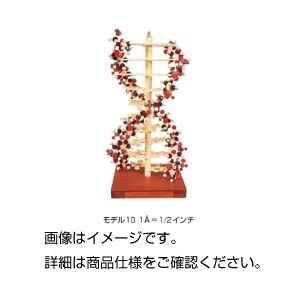 DNAモデル モデル10の詳細を見る