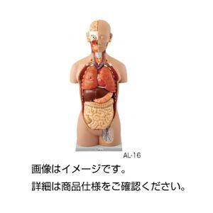 人体解剖模型 AL-16の詳細を見る
