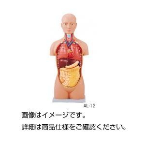 人体解剖模型(トルソー型) AL-12の詳細を見る