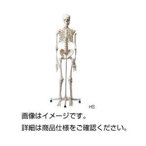 人体骨格模型 HSの詳細を見る