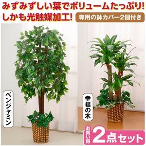インテリアグリーン/人工観葉植物 【2点セット ベンジャミン&幸福の木】 光触媒加工 幹:天然木使用