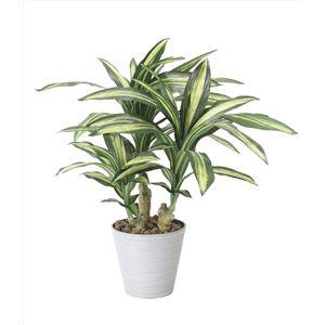 光の楽園【光触媒/人工観葉植物】幸福の木