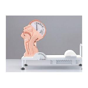 嚥下のメカニズム模型(看護実習モデル) 解剖部...の紹介画像6