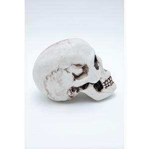 【コスプレ】 頭蓋骨 h02