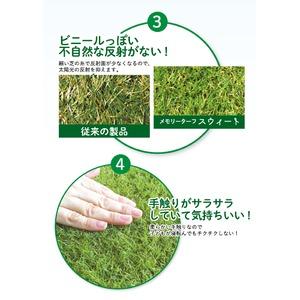 高品質 形状記憶 人工芝 メモリーターフ スウィート 巾1m×長さ10m(芝の長さ20mm) MTS20-0110