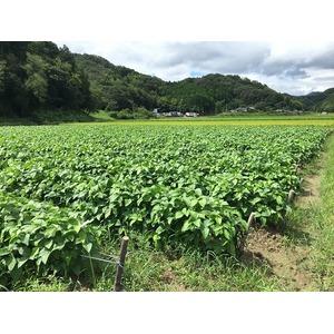 丹波やき 黒豆おかき(サラダ)【3袋セット】の紹介画像3
