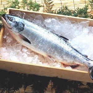 【北洋産】若紅鮭(さけ)1本 - 拡大画像