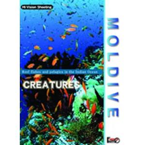 厳選!世界の海DVDセット - 拡大画像