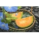 共選夕張メロン(品質【良】)1.3kgサイズ3玉(中) - 縮小画像4