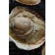 北海道BBQ大満足セット+北海甘エビ0.5kg付き(4人前〜6人前) - 縮小画像6