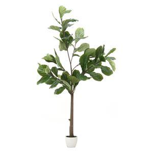 人工観葉植物 インテリアグリーン フィカス カシワバゴム - 拡大画像