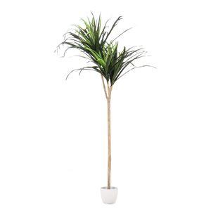 人工観葉植物 インテリアグリーン ドラセナ コンシンネ - 拡大画像