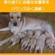 アーテミス・フレッシュミックス ミディアムラージブリードパピー1kg 12ヶ月以下の中・大型犬幼犬 - 縮小画像4