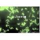 脱臭除菌剤ダッシュル ハンドスプレータイプ500ml×3本組 - 縮小画像6