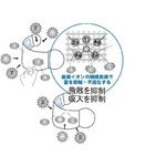 ZAT抗菌デザインマスク + 抗菌コットン×6個セット 【子供用】スター ゴールド/白 border=