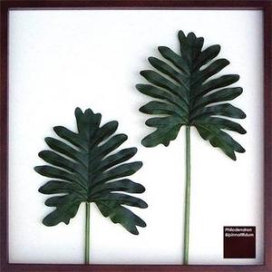 風景専門店あゆわら 《リーフパネル》Philodendron bipinnatifidum(セローム ヒトデカズラ) タイプ2 【サイズ 625x625x30mm】 - 拡大画像