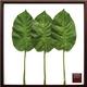 風景専門店あゆわら 《リーフパネル》Philodendron scandens ssp. Oxycardium(フィロデンドロン・オキシカルジウム/ ヒメカズラ) - 縮小画像1