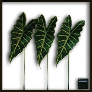 風景専門店あゆわら 《リーフパネル》Alocasia Amazonica(アロカシア アマゾニカ) - 拡大画像