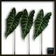 風景専門店あゆわら 《リーフパネル》Alocasia Amazonica(アロカシア アマゾニカ) - 縮小画像1