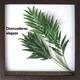 《リーフパネル》Chamaedorea elegans(テーブルヤシ) - 縮小画像1