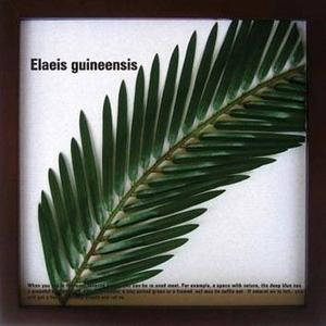 風景専門店あゆわら 《リーフパネル》Elaeis guineensis(ギニアアブラヤシ) タイプ4 【サイズ 325x325x20mm】 - 拡大画像