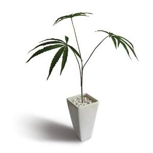 《人工観葉植物・造花》Cannabis sativa(ヘンプ/大麻) - 拡大画像