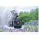 風景専門店あゆわら 《DVD》鐵路の響演〔SL・蒸気機関車の風景〕〔3枚組〕 - 縮小画像1