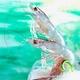 「天使の海老」たっぷり1kgセット(30〜40尾 化粧箱入り) - 縮小画像2