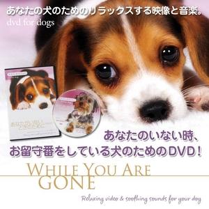 犬のためのDVD / あなたがいないときのために - 拡大画像