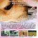 犬のためのDVD / あなたがいないときのために - 縮小画像2