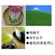 【業務用】玉露風 粉末一番(かぶせ茶) 4000包入 - 縮小画像2