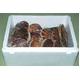 噴火湾産 活ホタテ 2年貝(3kg)+3年貝(3kg)食べ比べセット - 縮小画像1