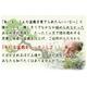 【通信講座】藤田茂男の流儀 〜盆栽上達法〜 [テキスト&DVD] - 縮小画像1