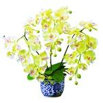 磁器の鉢に入った胡蝶蘭(光触媒)金運の黄色