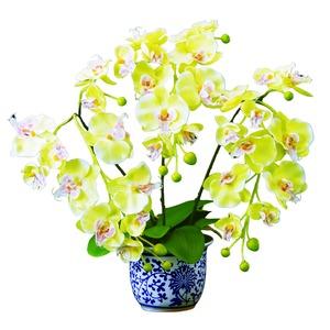 磁器の鉢に入った胡蝶蘭(光触媒)金運の黄色  - 拡大画像