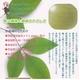 【電丸】【3個パック】かおりちゃん お茶屋さんの緑茶石鹸 95g - 縮小画像4