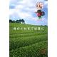 【電丸】【3個パック】かおりちゃん お茶屋さんの緑茶石鹸 95g - 縮小画像6