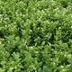 海東ブラザース ジャスミン茶 有機JAS認定商品 無添加・無着色・無香料 【500ml×24本】 - 縮小画像2
