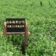 海東ブラザース 緑茶 有機JAS認定商品 無添加・無着色・無香料 【500ml×24本】 - 縮小画像5