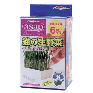 (まとめ)キャティーマンasap猫の生野菜 6回分【×24セット】 - 拡大画像