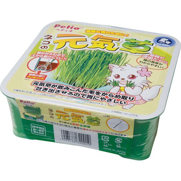 (まとめ)ネコの元気草(ペット用品・猫用フード)【×6セット】